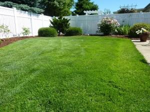back-yard-250890_640